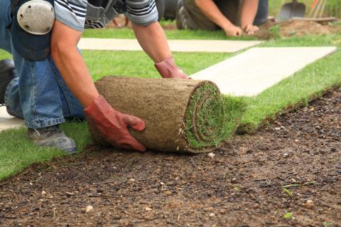 Pflanzen & Rollrasen
